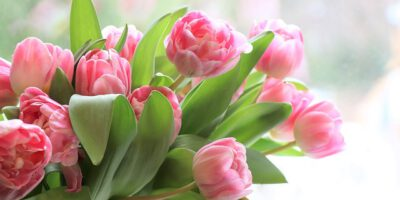 tulips-4026273_640